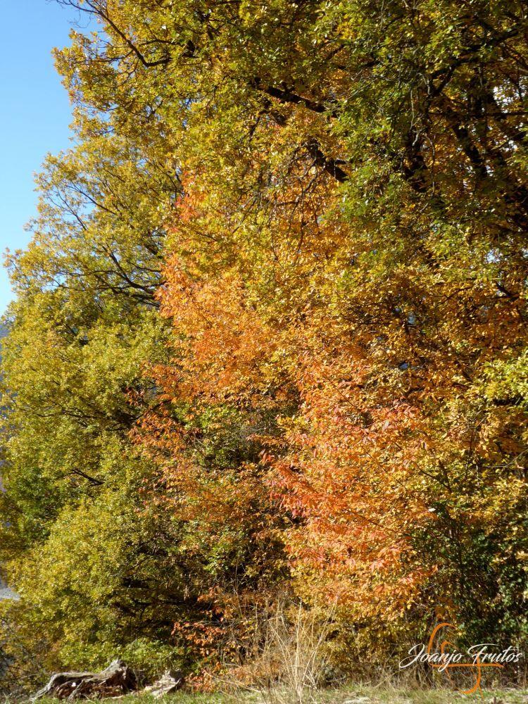 P1210004 - Veroño cerca de Castejón de Sos - Liri.
