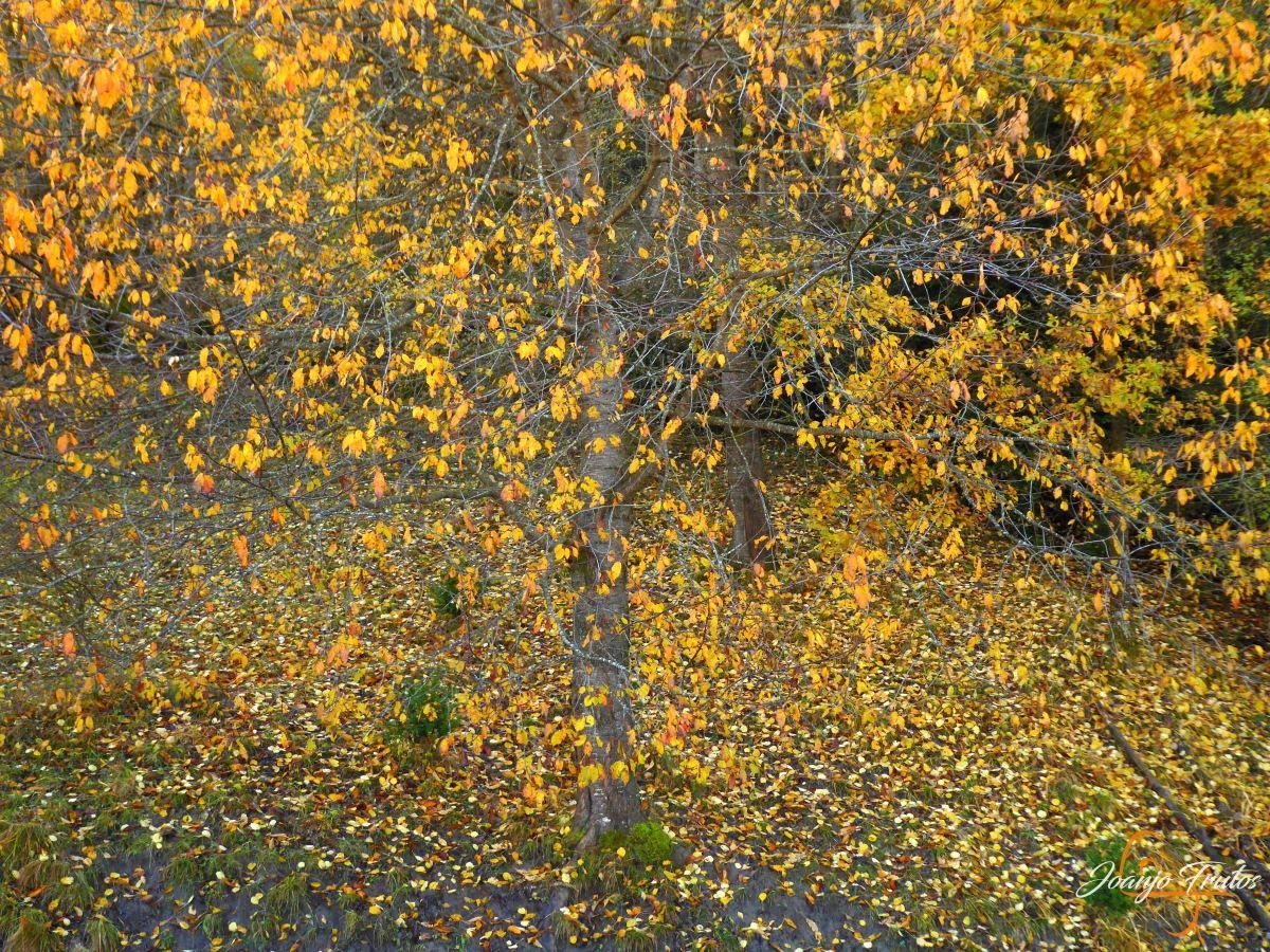 P1210018 - Veroño cerca de Castejón de Sos - Liri.
