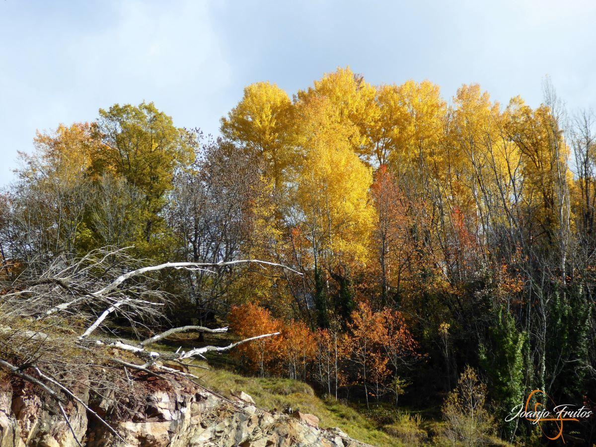 P1210023 - Veroño cerca de Castejón de Sos - Liri.