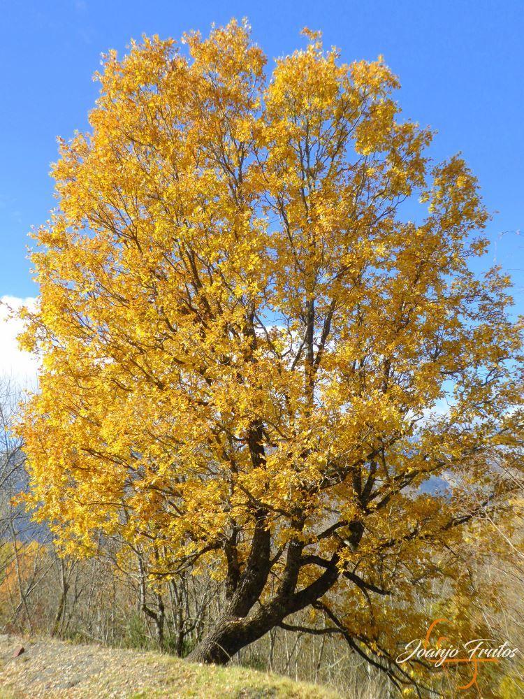 P1210049 - Veroño cerca de Castejón de Sos - Liri.