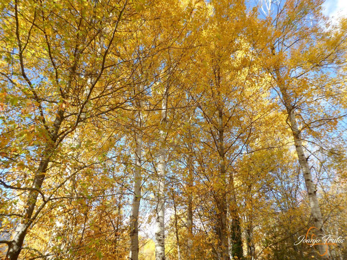 P1210059 - Veroño cerca de Castejón de Sos - Liri.