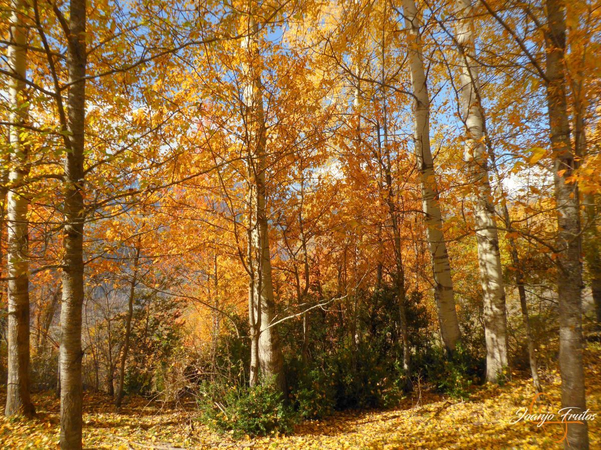 P1210067 - Veroño cerca de Castejón de Sos - Liri.
