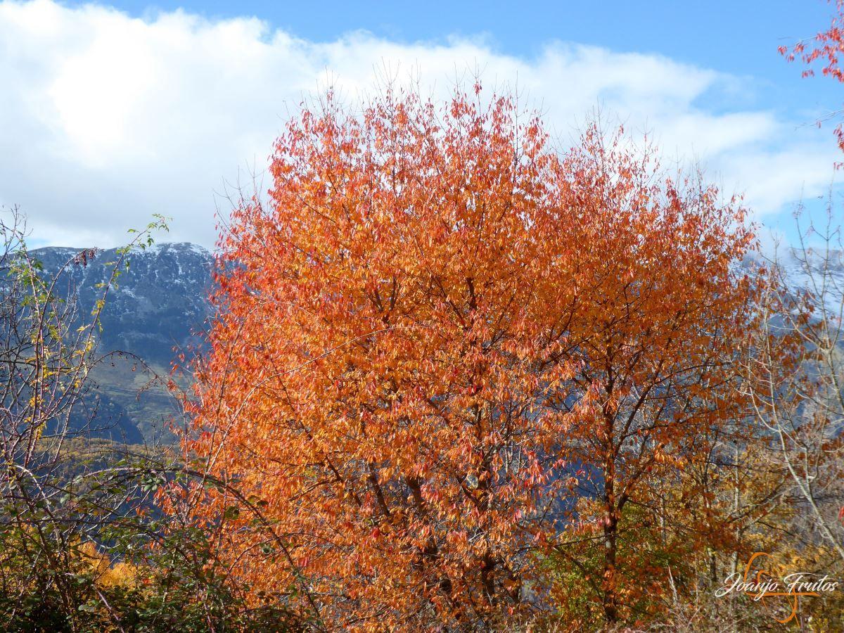 P1210071 - Veroño cerca de Castejón de Sos - Liri.