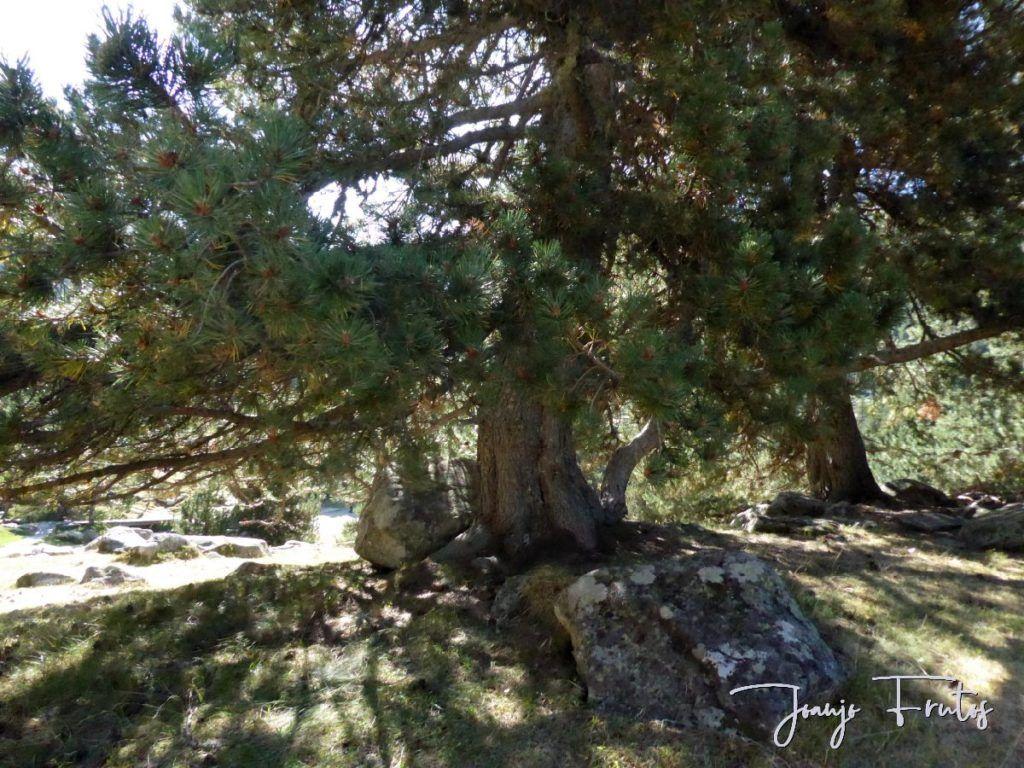 P1280881 1024x768 - Un día en La Besurta, Valle de Benasque.