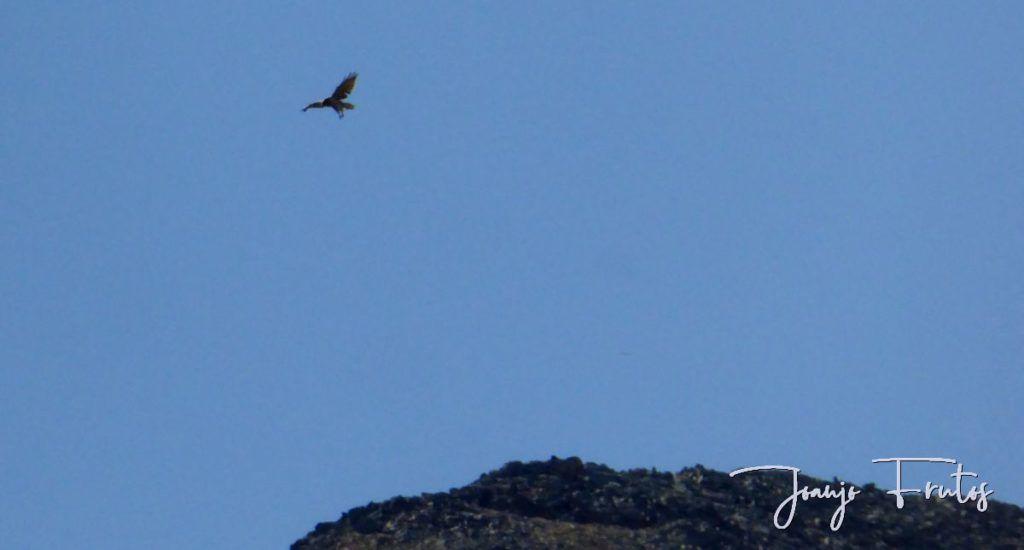 P1280900 1024x550 - Un día en La Besurta, Valle de Benasque.
