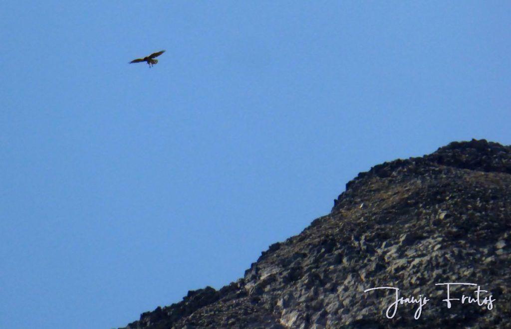 P1280901 1024x660 - Un día en La Besurta, Valle de Benasque.