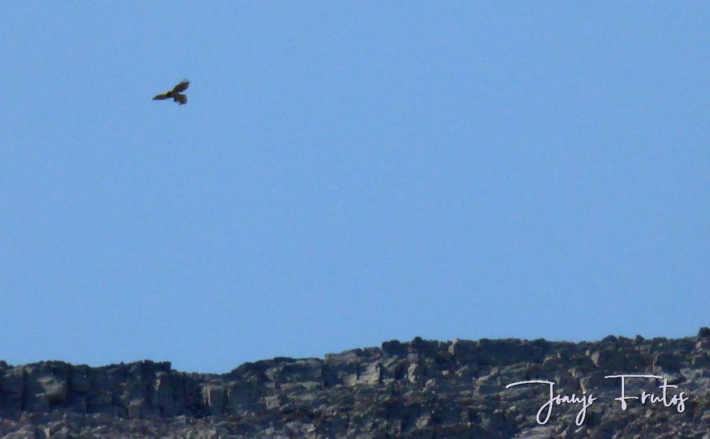 P1280902 1024x633 - Un día en La Besurta, Valle de Benasque.