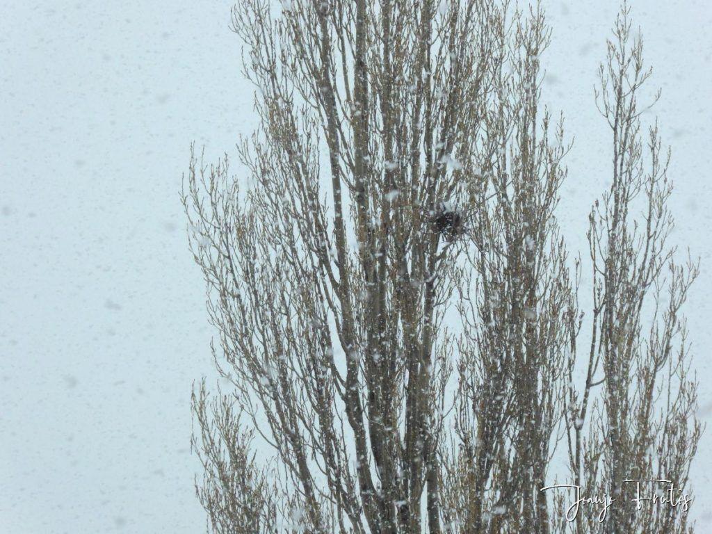 P1320129 1024x768 - Se casi acaba marzo nevando en Cerler (Valle de Benasque).