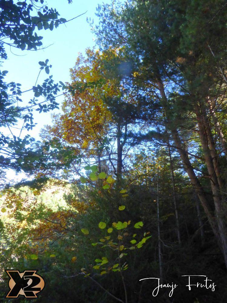 P1350846 - Hojas de otoño con Luna Llena.
