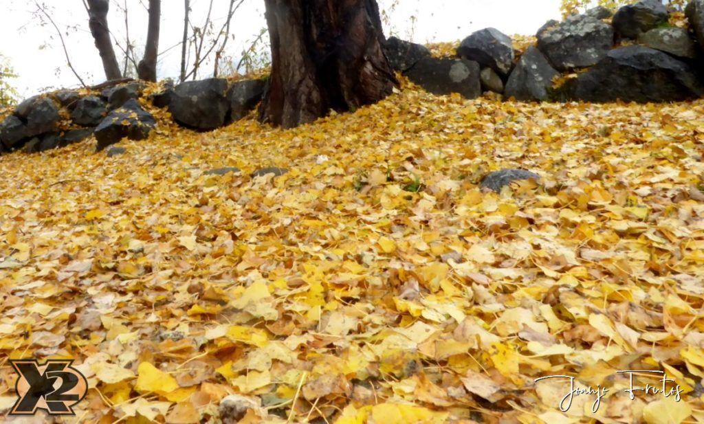 P1350861 1024x617 - Primera nevada de noviembre en Cerler.