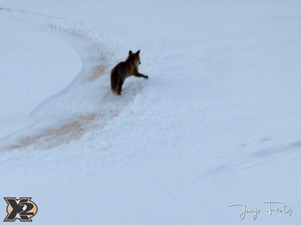 P1370578 1024x768 - Por la tarde más nieve en Cerler.