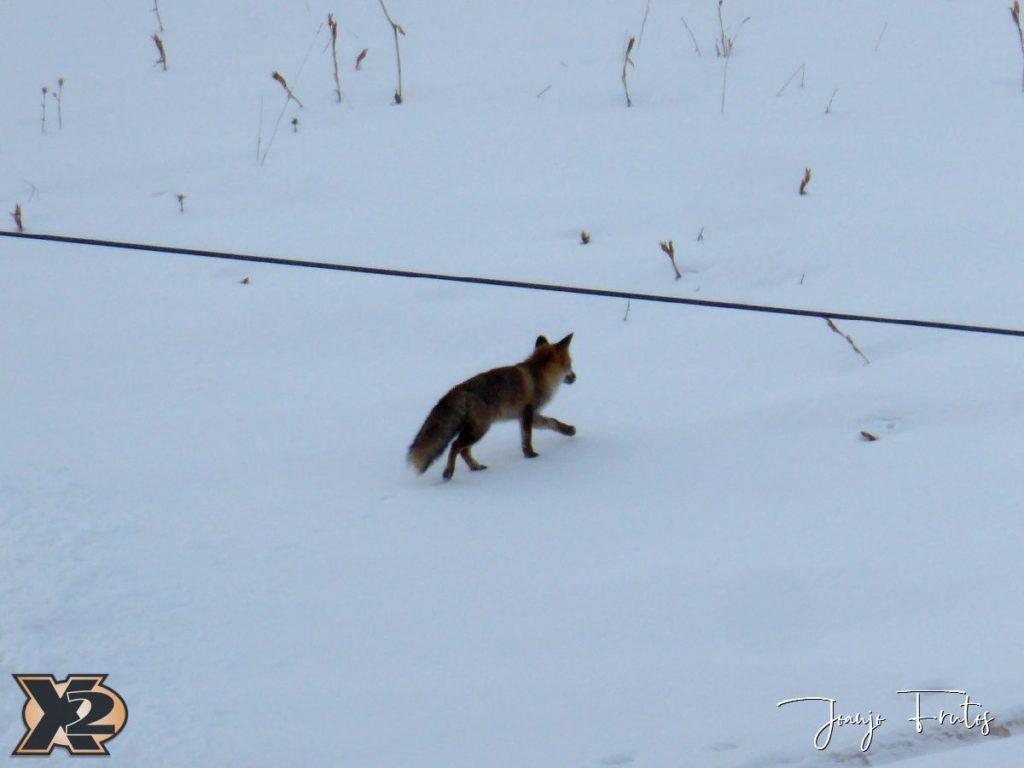 P1370579 1024x768 - Por la tarde más nieve en Cerler.