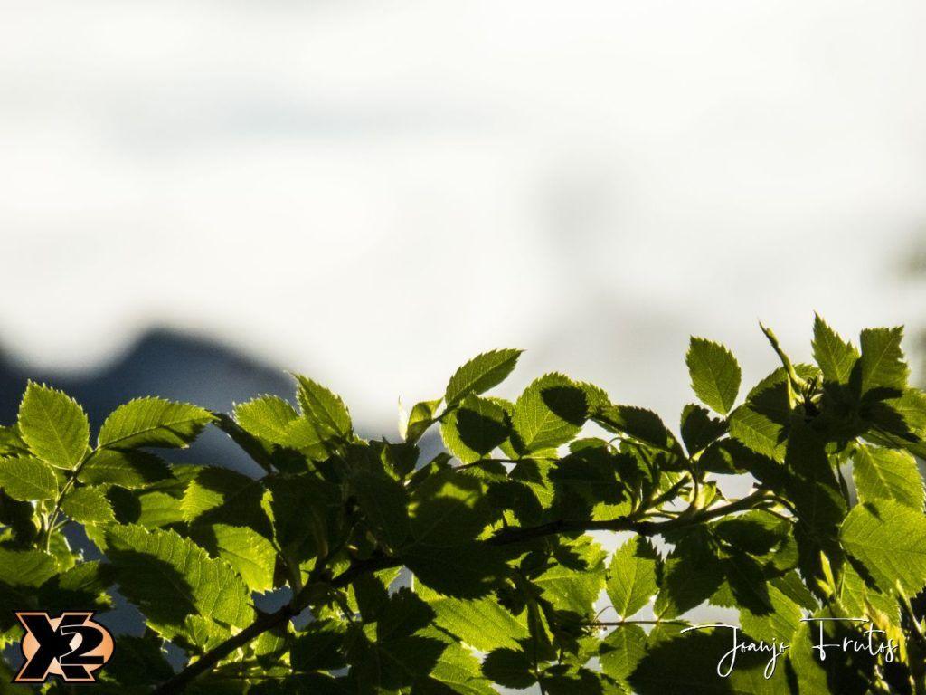 P1390151 1 1024x768 - Verbena con picos nevados