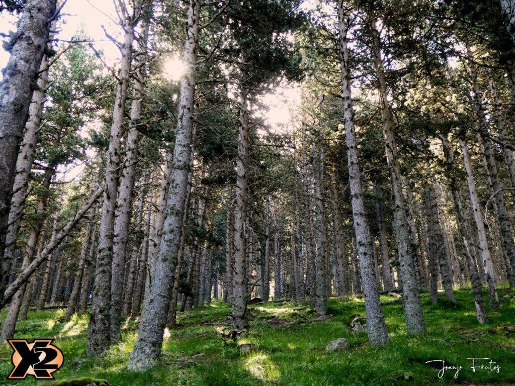 P1000326 copia 1024x768 - Fotografía en bosques de Cerler.