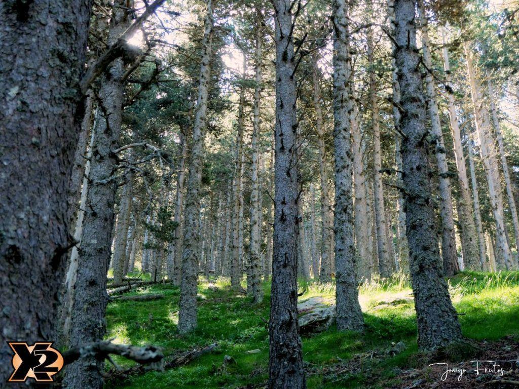 P1000328 copia 1024x768 - Fotografía en bosques de Cerler.
