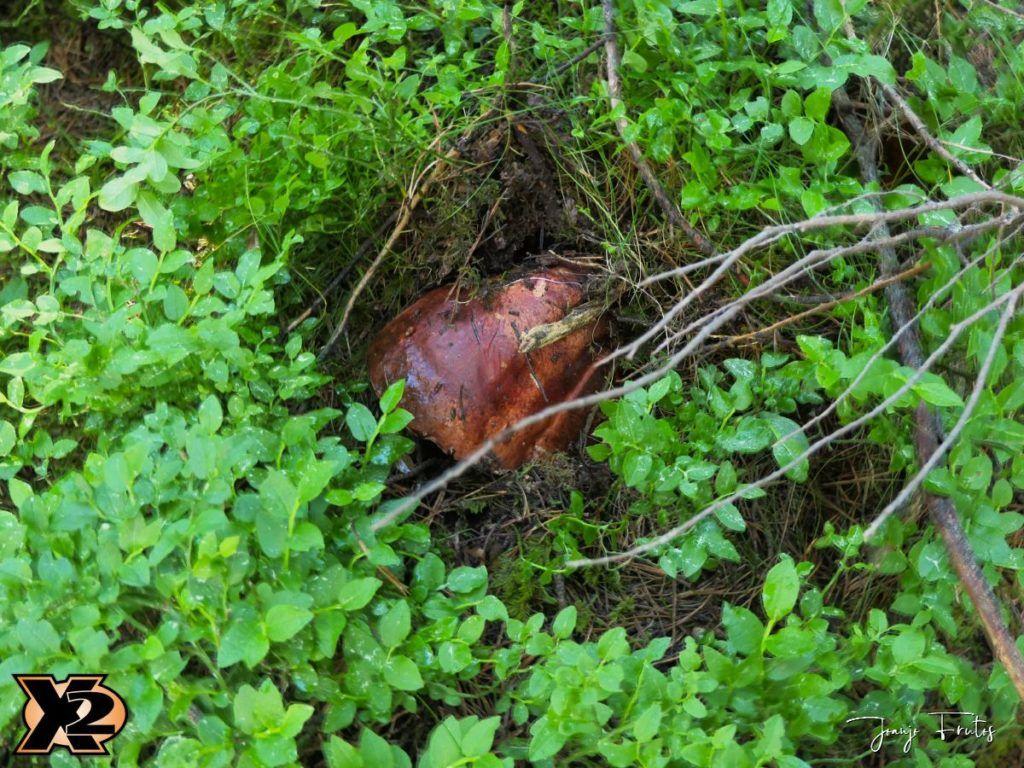 P1000335 copia 1024x768 - Fotografía en bosques de Cerler.