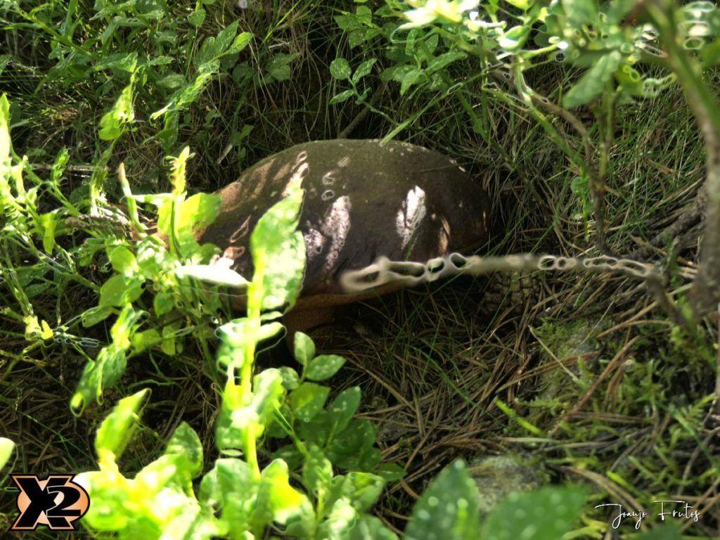 P1000336 copia 1024x768 - Fotografía en bosques de Cerler.