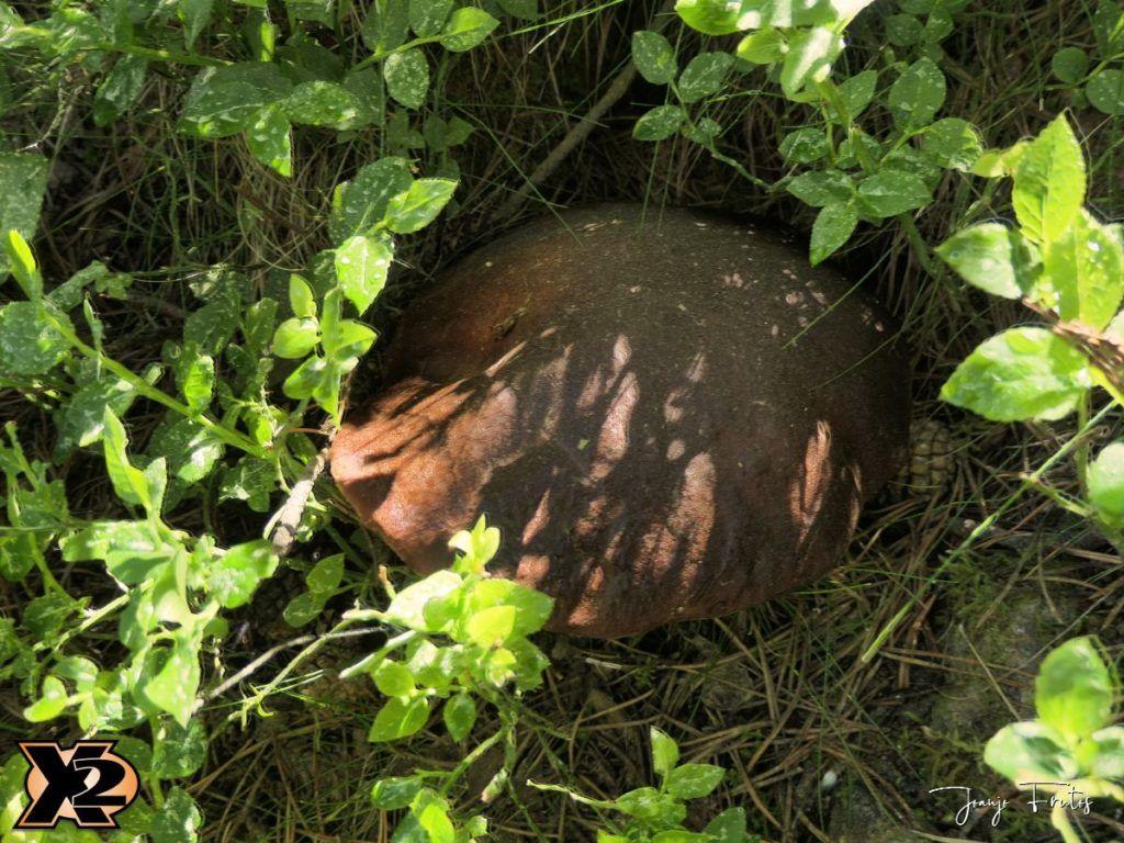 P1000337 copia 1024x768 - Fotografía en bosques de Cerler.