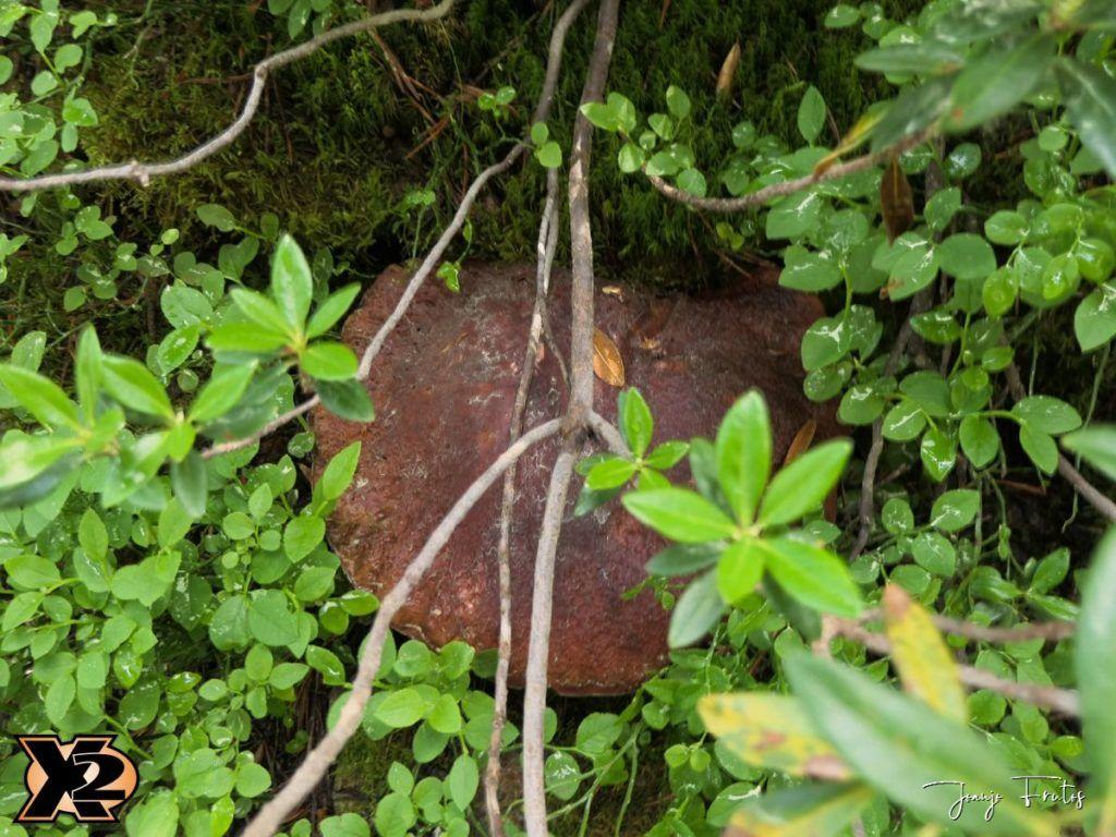 P1000340 copia 1024x768 - Fotografía en bosques de Cerler.